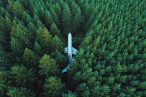 plane-in-forest