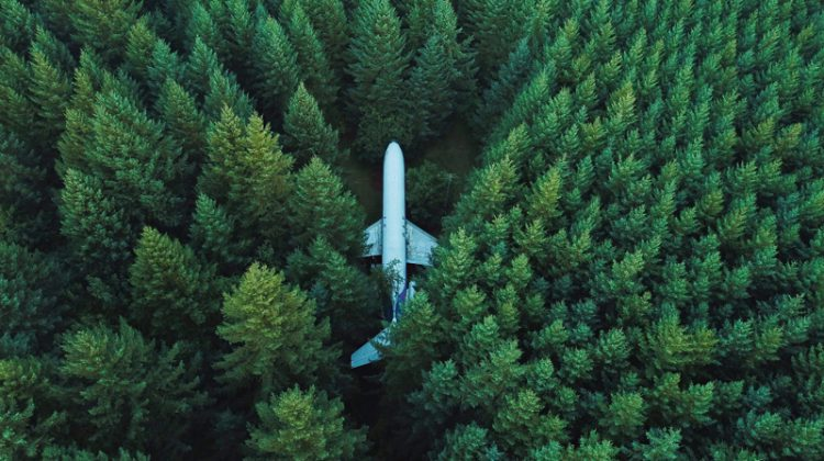 plane in forest